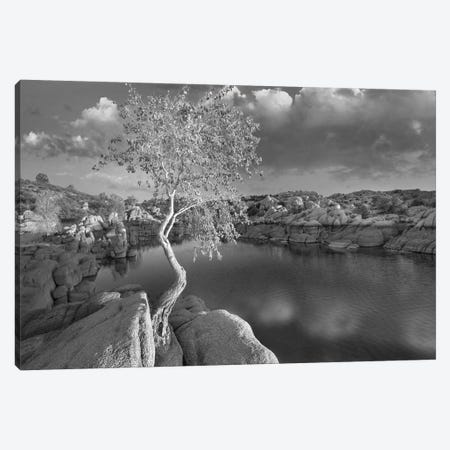 Cottonwood growing in the Granite Dells, Watson Lake, Arizona Canvas Print #TFI1584} by Tim Fitzharris Canvas Print