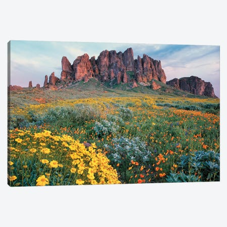 California Brittlebush, Lost Dutchman State Park, Superstition Mountains, Arizona Canvas Print #TFI159} by Tim Fitzharris Canvas Art