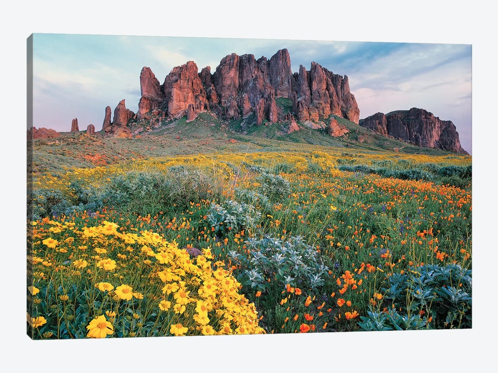California Brittlebush, Lost Dutchman State Park, Superstition Mountains, Arizona by Tim Fitzharris 1-piece Canvas Print