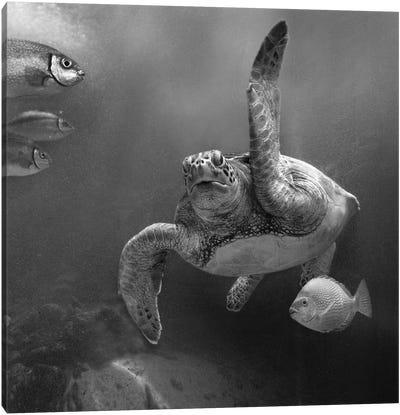 Green Sea Turtle and fish, Sabah, Malaysia Canvas Art Print