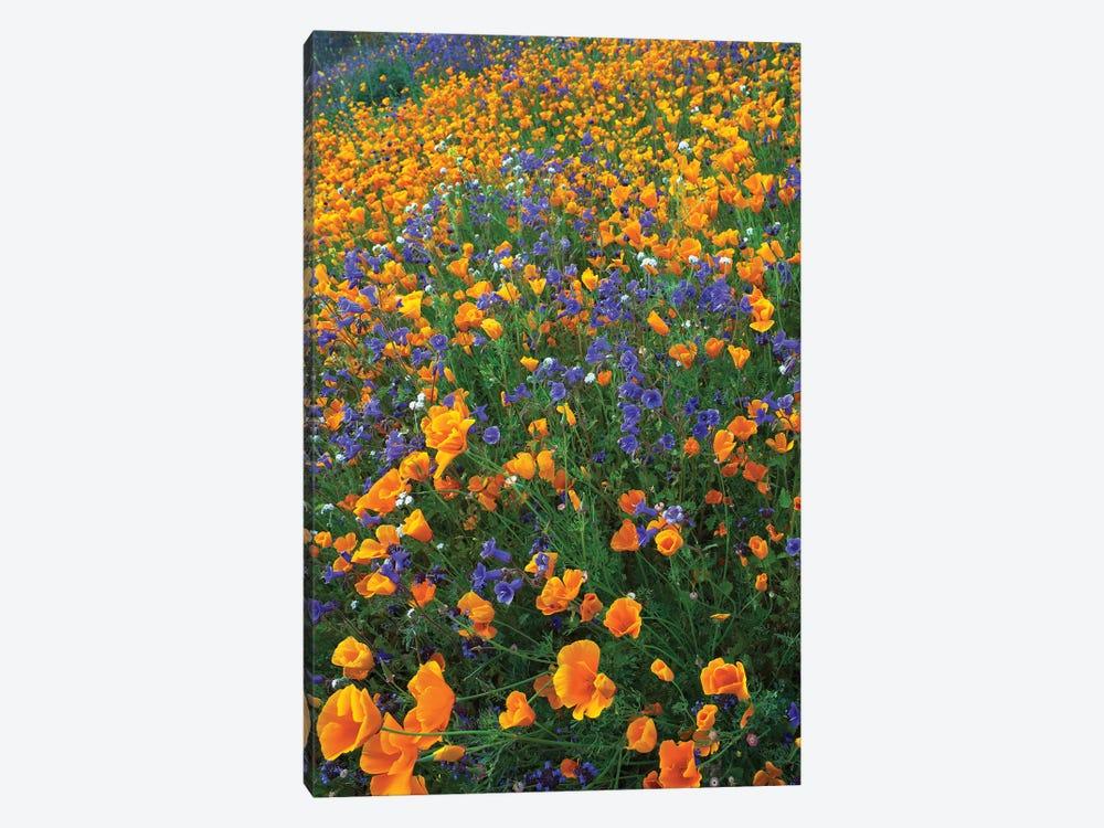 California Poppy And Desert Bluebell Flowers, Antelope Valley, California II by Tim Fitzharris 1-piece Art Print