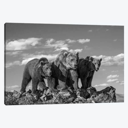 Grizzly Bear mother with two one year old cubs, North America Canvas Print #TFI1637} by Tim Fitzharris Canvas Print