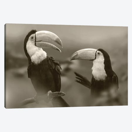 Keel-billed Toucan pair, Costa Rica Canvas Print #TFI1647} by Tim Fitzharris Canvas Art