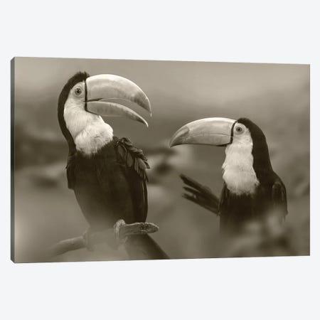 Keel-billed Toucan pair, Costa Rica Canvas Print #TFI1647} by Tim Fitzharris Canvas Art