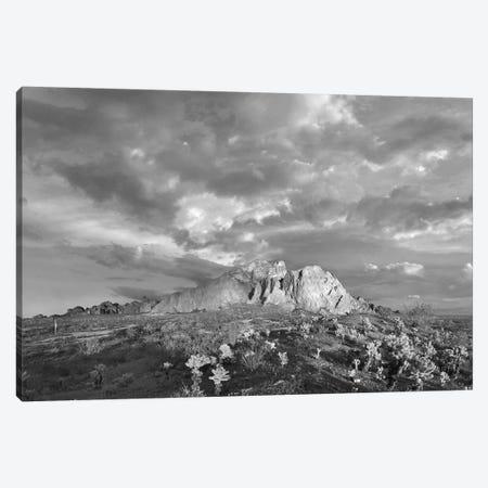 Kofa Mountain National Wildlife Refuge, Arizona Canvas Print #TFI1648} by Tim Fitzharris Canvas Print