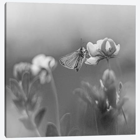 Least Skipper butterfly on Common Birdsfoot Trefoil (Lotus corniculatus), Ithaca, New York Canvas Print #TFI1650} by Tim Fitzharris Canvas Art