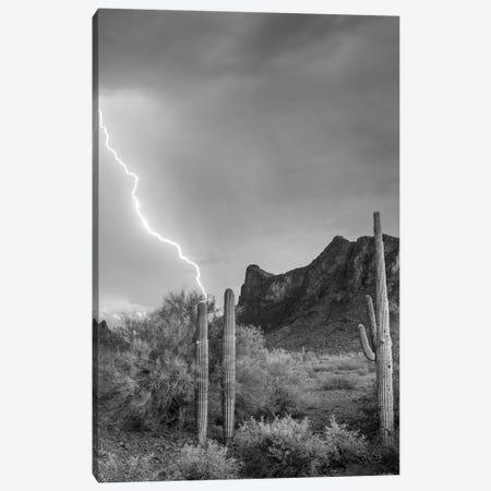 Lightning over Picacho Peak, Picacho State Park, Arizona Canvas Print #TFI1652} by Tim Fitzharris Canvas Artwork