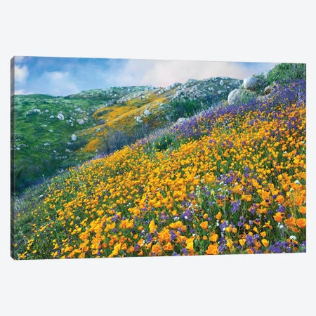 California Poppy And Desert Bluebell Flowers, Canyon Hills, Santa Ana Mountains, California Canvas Print #TFI165} by Tim Fitzharris Canvas Wall Art