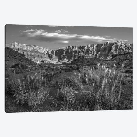 Miner's Candle flowers in desert, Cathedral Wash, Vermilion Cliffs National Monument, Arizona Canvas Print #TFI1660} by Tim Fitzharris Canvas Print