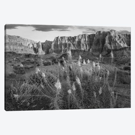 Miner's Candle flowers in desert, Cathedral Wash, Vermilion Cliffs National Monument, Arizona Canvas Print #TFI1661} by Tim Fitzharris Canvas Print