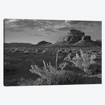 Miner's Candle flowers, Cathedral Wash, Vermilion Cliffs National Monument, Arizona Canvas Print #TFI1662} by Tim Fitzharris Canvas Art Print