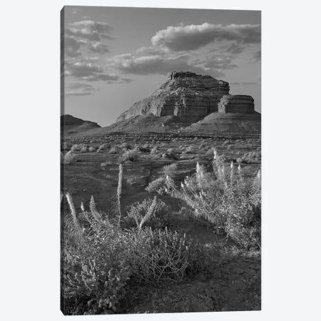 Miner's Candle flowers, Echo Canyon, Vermilion Cliffs National Monument, Arizona Canvas Print #TFI1663} by Tim Fitzharris Canvas Art Print