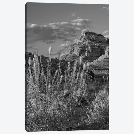 Miner's Candle flowers, Echo Canyon, Vermilion Cliffs National Monument, Arizona Canvas Print #TFI1664} by Tim Fitzharris Canvas Art