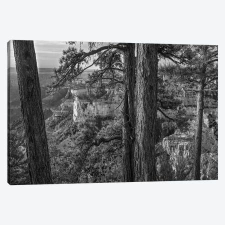 Mount Hayden from Point Imperial, North Rim, Grand Canyon National Park, Arizona Canvas Print #TFI1674} by Tim Fitzharris Canvas Print