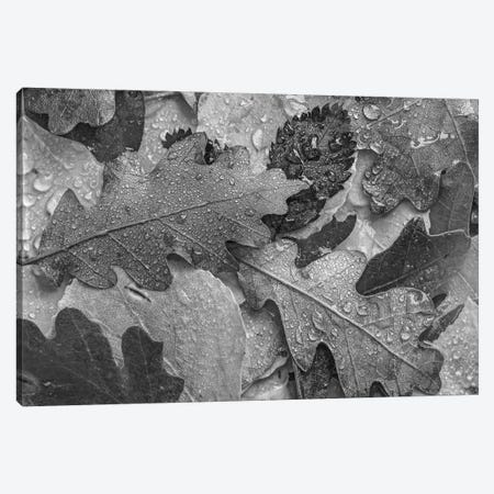 Oak, Cottonwood, and Willow leaves in fall colors Canvas Print #TFI1698} by Tim Fitzharris Canvas Art