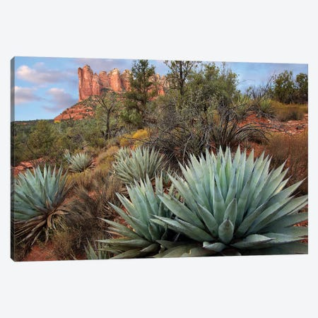 Agave And Coffee Pot Rock Near Sedona, Arizona Canvas Print #TFI16} by Tim Fitzharris Canvas Art
