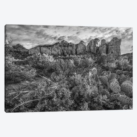 Opuntia cactus and Bearberry, Coffee Pot Rock, Coconino National Forest, Arizona Canvas Print #TFI1705} by Tim Fitzharris Art Print
