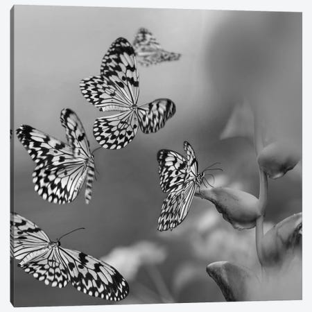 Paper Kite butterflies flying, Philippines Canvas Print #TFI1709} by Tim Fitzharris Canvas Art