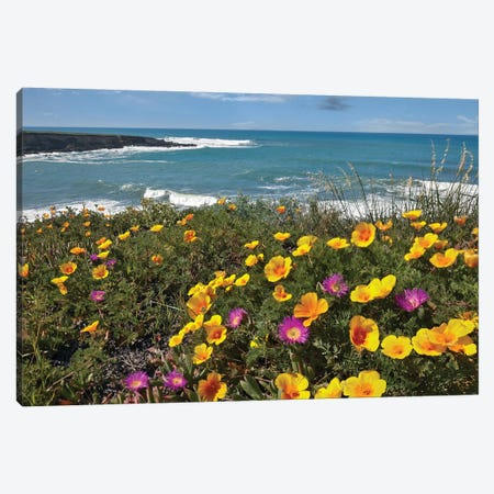 California Poppy And Iceplant, Montano De Oro State Park, California Canvas Print #TFI170} by Tim Fitzharris Canvas Artwork