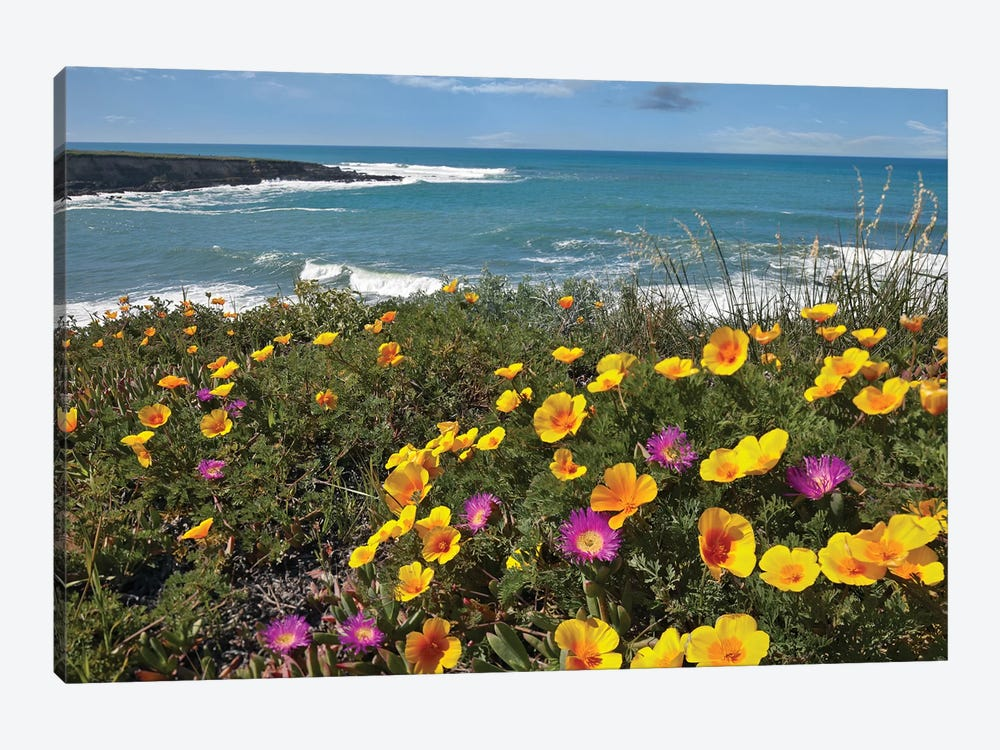 California Poppy And Iceplant, Montano De Oro State Park, California by Tim Fitzharris 1-piece Canvas Wall Art