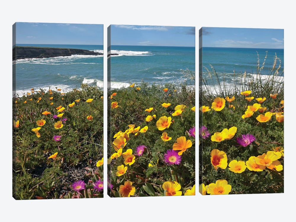 California Poppy And Iceplant, Montano De Oro State Park, California by Tim Fitzharris 3-piece Canvas Artwork
