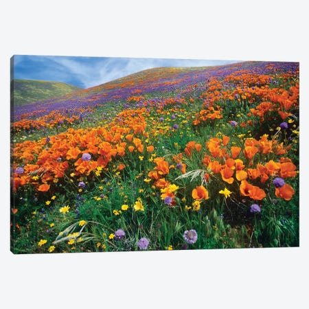 California Poppy And Other Wildflowers Growing On Hillside, Spring, Antelope Valley, California Canvas Print #TFI171} by Tim Fitzharris Canvas Wall Art
