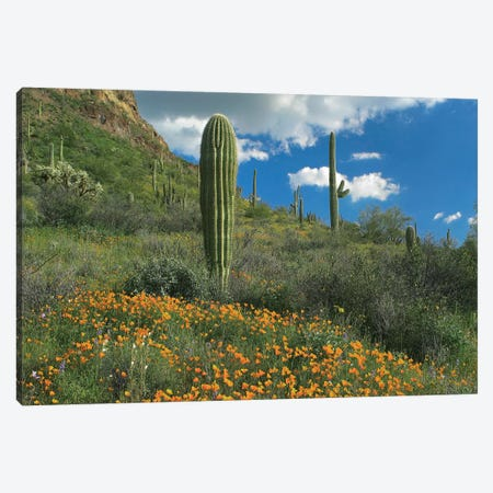 California Poppy And Saguaro Cacti, Organ Pipe Cactus National Monument, Arizona I Canvas Print #TFI172} by Tim Fitzharris Canvas Art