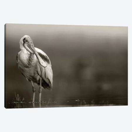 Roseate Spoonbill adult in breeding plumage, North America Canvas Print #TFI1736} by Tim Fitzharris Canvas Wall Art
