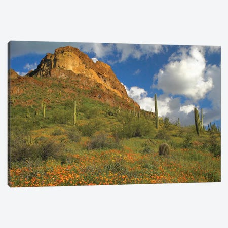 California Poppy And Saguaro Cacti, Organ Pipe Cactus National Monument, Arizona II Canvas Print #TFI173} by Tim Fitzharris Canvas Wall Art