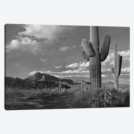 Saguaro and Teddybear Cholla cacti and the Picacho Mountains from Picacho Peak State Park, Arizona Canvas Print #TFI1742} by Tim Fitzharris Canvas Wall Art