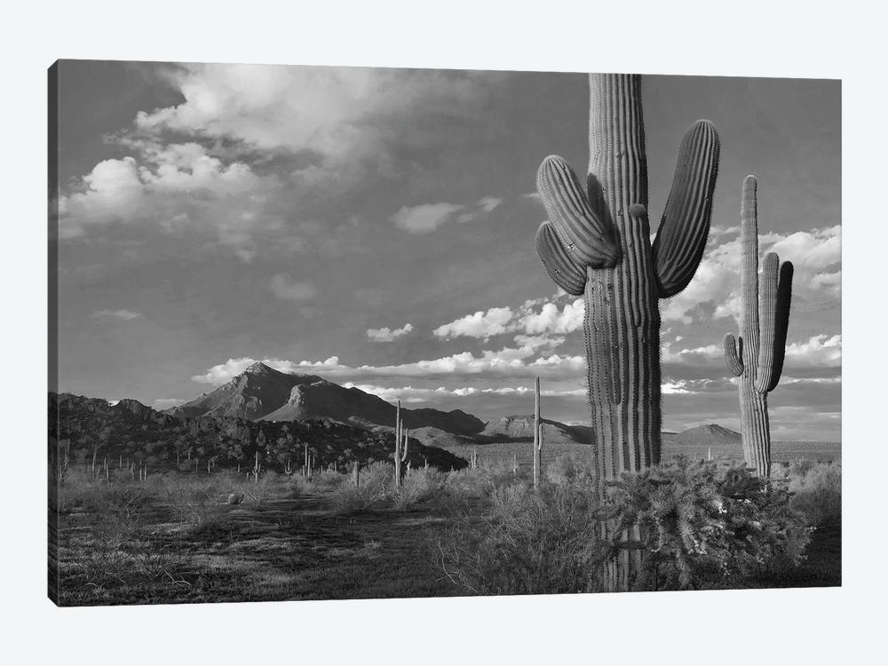 Saguaro and Teddybear Cholla cacti and the Picacho Mountains from Picacho Peak State Park, Arizona by Tim Fitzharris 1-piece Canvas Wall Art