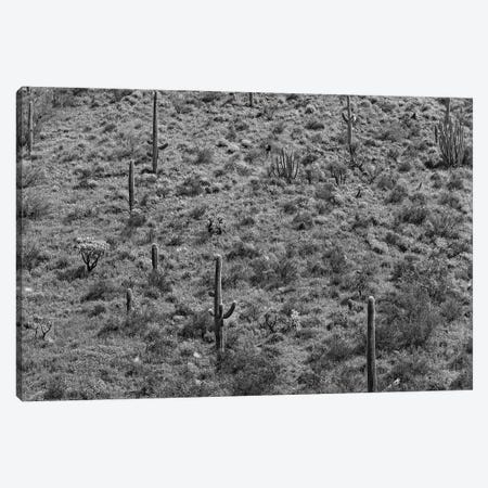 Saguaro cacti, Organ Pipe Cactus National Monument, Arizona Canvas Print #TFI1749} by Tim Fitzharris Canvas Art