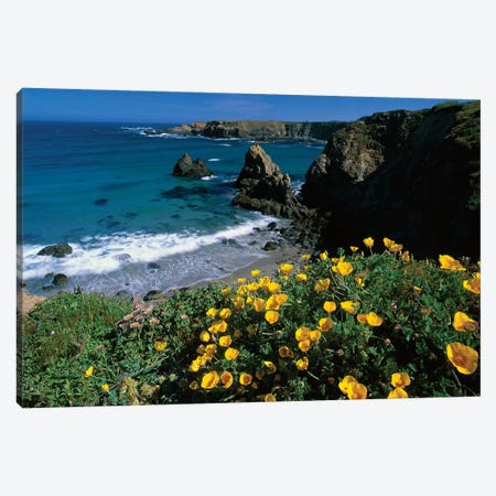California Poppy Cluster Growing On Coastal Cliff, Jughandle State Reserve, Mendocino County, California Canvas Print #TFI174} by Tim Fitzharris Canvas Art Print