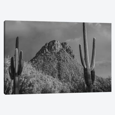 Saguaro Catcit and the Tucson Mountains, Arizona Canvas Print #TFI1758} by Tim Fitzharris Canvas Art Print