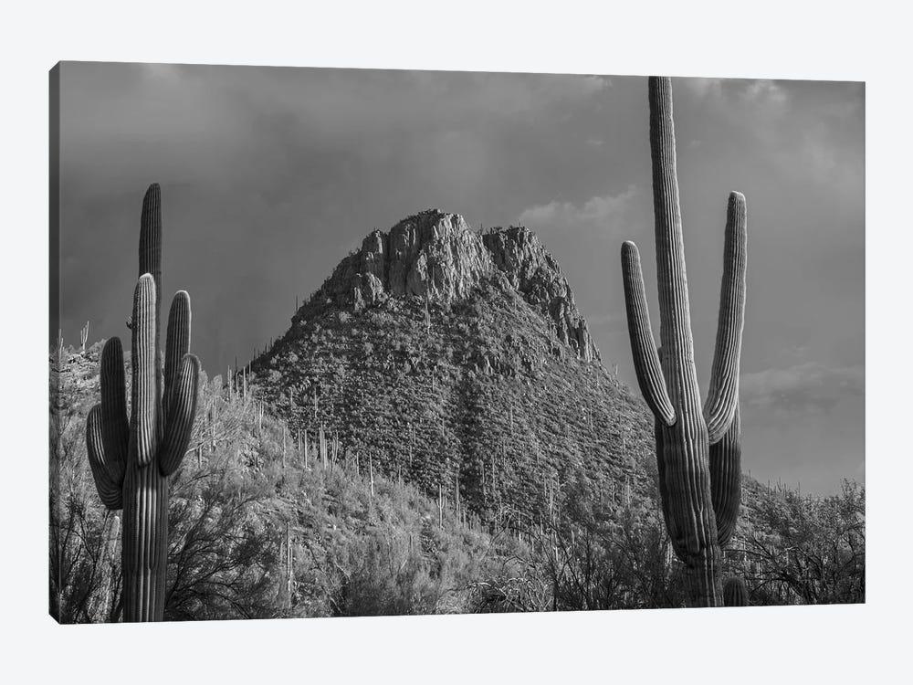 Saguaro Catcit and the Tucson Mountains, Arizona by Tim Fitzharris 1-piece Canvas Art Print