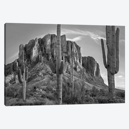 Saguaros and Superstition Mountains, Lost Dutchman State Park, Arizona Canvas Print #TFI1759} by Tim Fitzharris Art Print