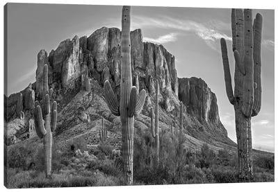 Saguaros and Superstition Mountains, Lost Dutchman State Park, Arizona Canvas Art Print