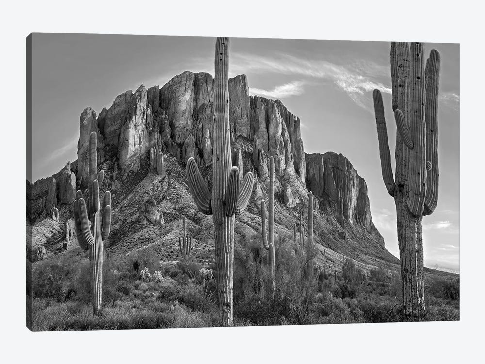 Saguaros and Superstition Mountains, Lost Dutchman State Park, Arizona by Tim Fitzharris 1-piece Canvas Art