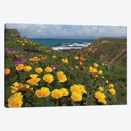 California Poppy Field, Montano De Oro State Park, California Canvas Print #TFI176} by Tim Fitzharris Canvas Print