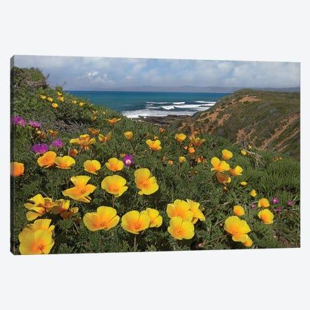 California Poppy Field, Montano De Oro State Park, California Canvas Print #TFI176} by Tim Fitzharris Canvas Print