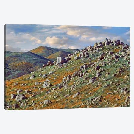 California Poppy Flowers In Rocky Grassland, Canyon Hills, Santa Ana Mountains, California Canvas Print #TFI177} by Tim Fitzharris Canvas Art Print