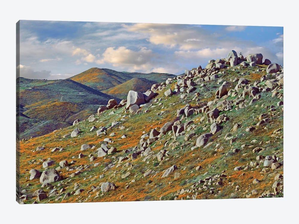 California Poppy Flowers In Rocky Grassland, Canyon Hills, Santa Ana Mountains, California by Tim Fitzharris 1-piece Art Print