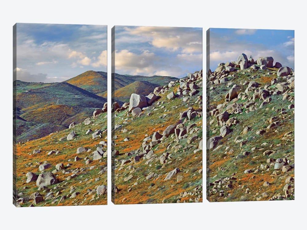 California Poppy Flowers In Rocky Grassland, Canyon Hills, Santa Ana Mountains, California by Tim Fitzharris 3-piece Canvas Print