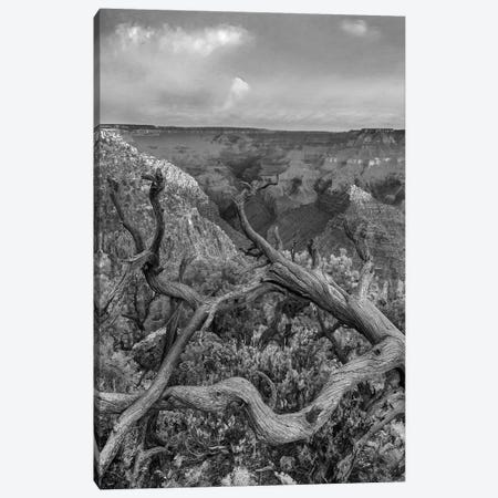 South Rim, Grand Canyon, Arizona Canvas Print #TFI1783} by Tim Fitzharris Canvas Artwork