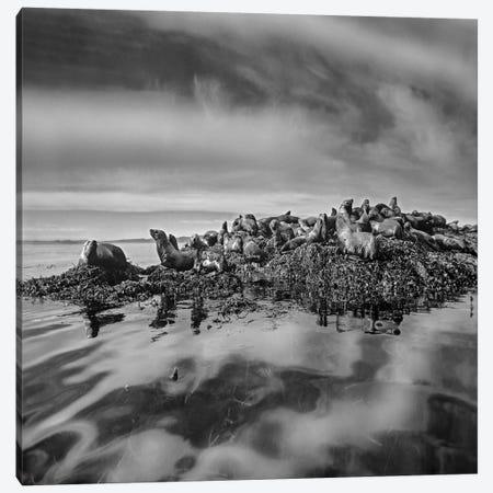 Steller's Sea Lions, Alaska Canvas Print #TFI1792} by Tim Fitzharris Canvas Print