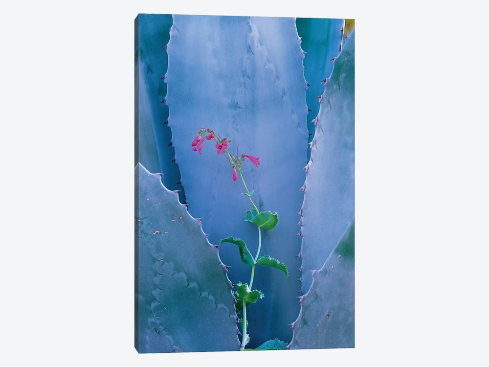 Agave And Parry's Penstemon Close Up, North America I by Tim Fitzharris 1-piece Canvas Wall Art