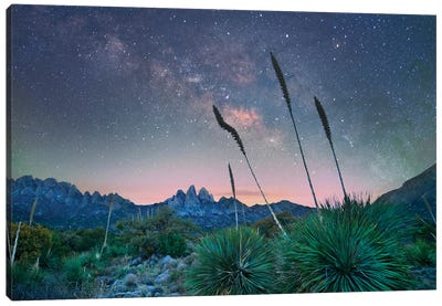 Agave And The Milky Way, Organ Mountains-Desert Peaks National Monument, New Mexico II Canvas Art Print