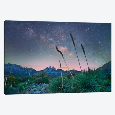 Agave And The Milky Way, Organ Mountains-Desert Peaks National Monument, New Mexico II 3-Piece Canvas #TFI1842} by Tim Fitzharris Art Print