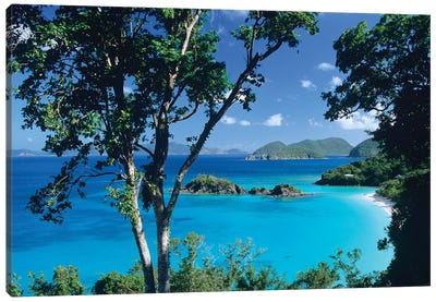 Caribbean Seen Through Trees, Virgin Islands National Park Canvas Art Print