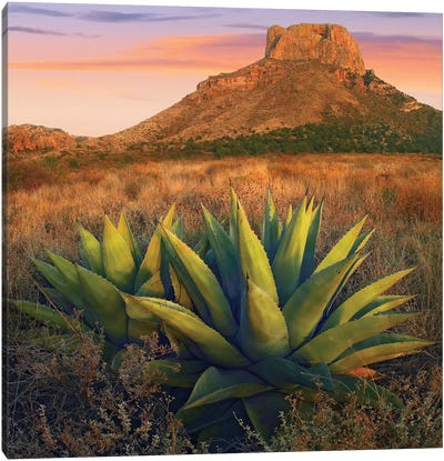 Casa Grande Butte With Agave In Foreground, Big Bend National Park, Texas Canvas Art Print